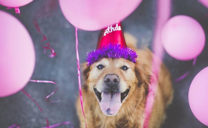 Aniversário do meu cachorro